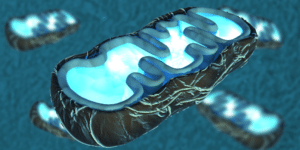 all about Mitochondria