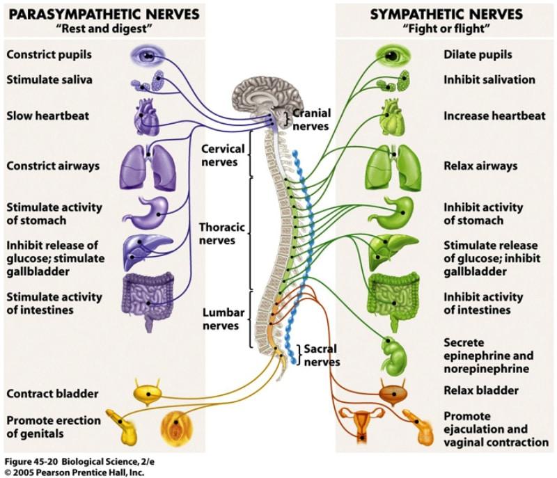 Impacts of trauma